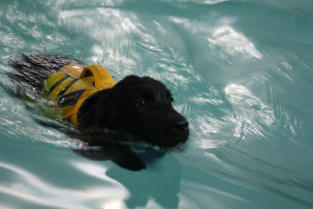 Jersey's First Swim